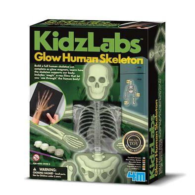 4M Kidz Labs Glow Human Skeleton